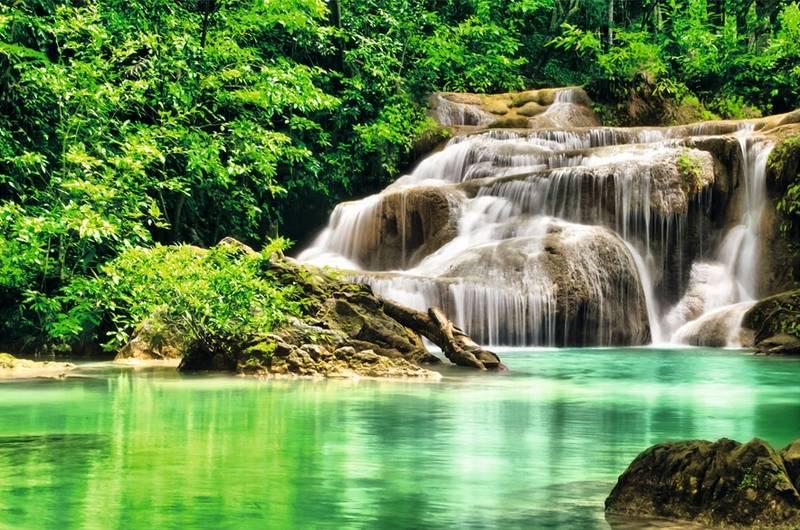 Купить фотообои для стен: Лесной водопад +