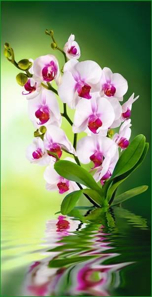 Купить фотообои для стен: Орхидея