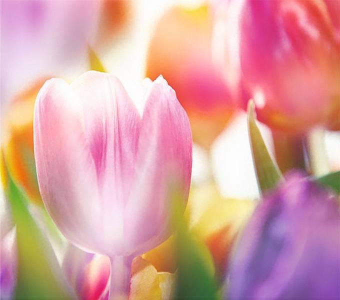 Купить фотообои для стен: Цветущая весна