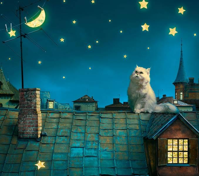 Купить фотообои для стен: Лунный кот
