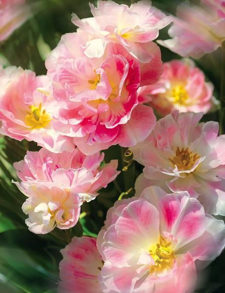 Купить фотообои для стен: Соцветие