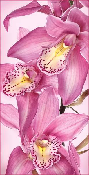 Купить фотообои для стен: Цветы Афродиты