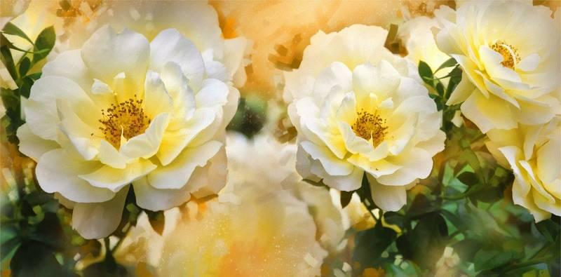 Купить фотообои для стен: Чайные розы