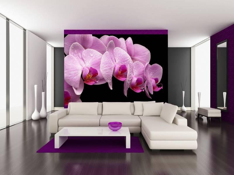 Фотообои в интерьере для кухни: фотообои орхидеи, розовые орхидеи, орхидеи на темном фоне, цветы 3D