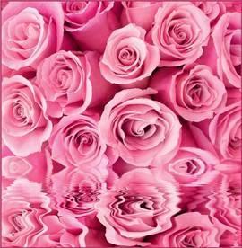 Розовые розы, отражение