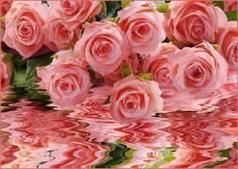 Нежно-розовый букет