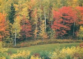 Осенняя свежесть