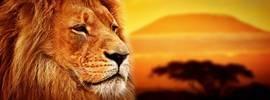 Царь саванны