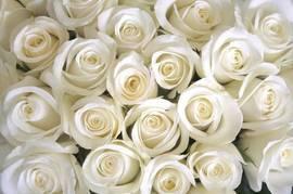 Кремовые розы 1