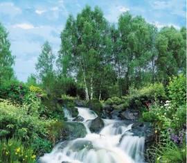 Березки у водопада