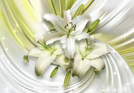 Лилии Свежесть