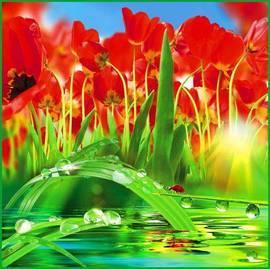 Тюльпаны, отражение